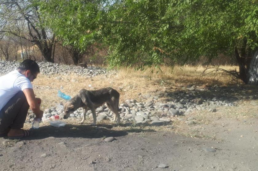 Брошенная в Джалал-Абаде собака три месяца ждет своего хозяина